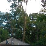 Gallery Tree Service 01