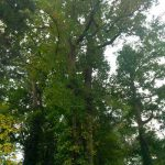 Gallery Tree Service 16