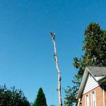 Gallery Tree Service 18