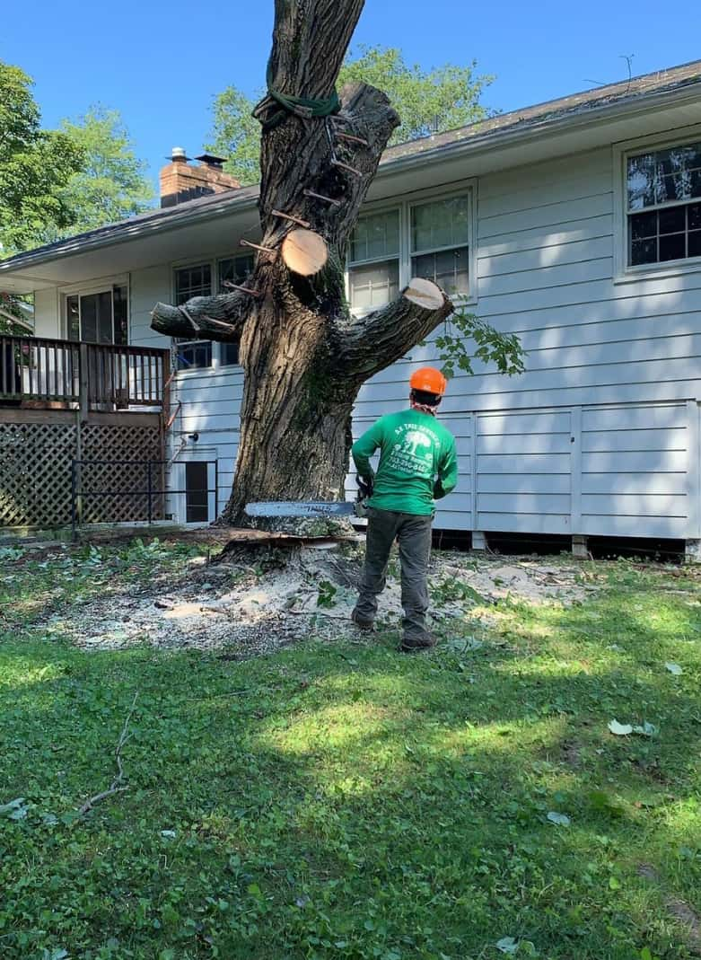 tree services img section